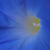Bluish 2