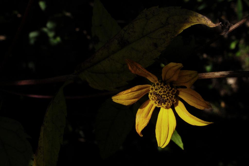 枯れゆくも、花