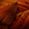 ゆく秋を惜しむ