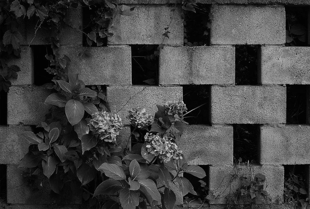 花園 monochrome