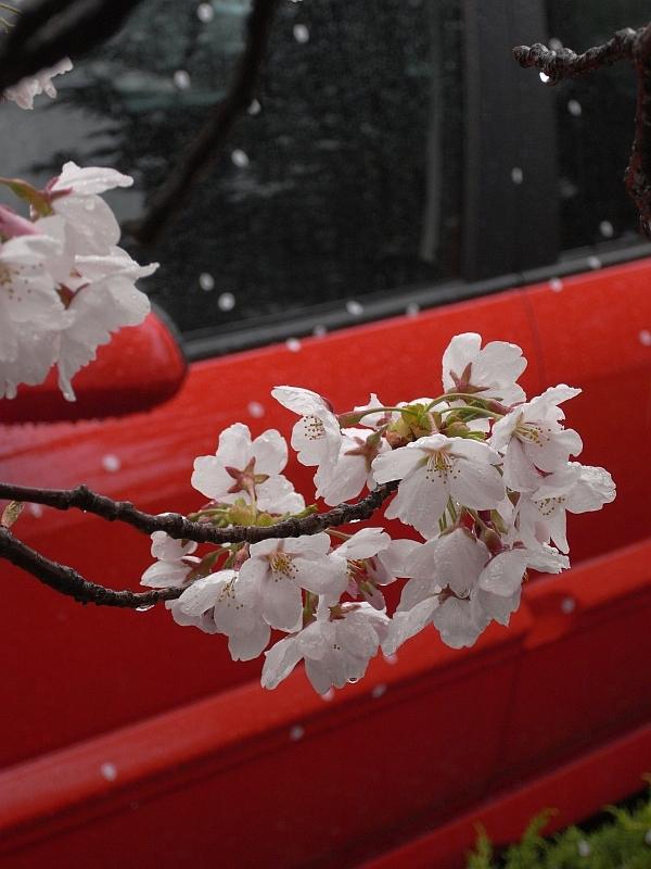 散る桜・残る桜