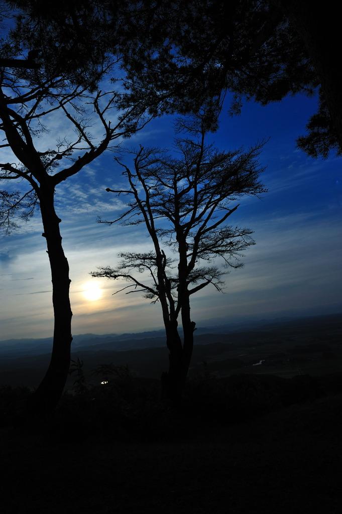 風に凍える樹