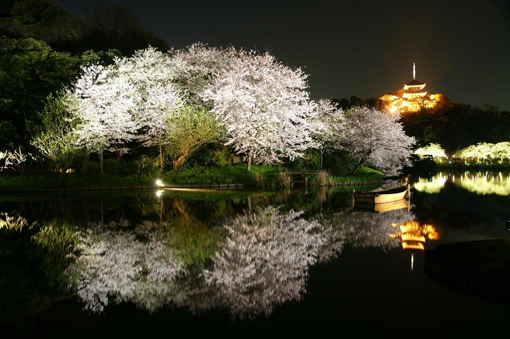 三渓園の夜桜