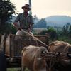 葉巻農園の男、リカルド