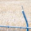 鉄線のむこうの枯れ草