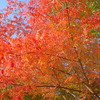 ちょっと早い岡山の紅葉