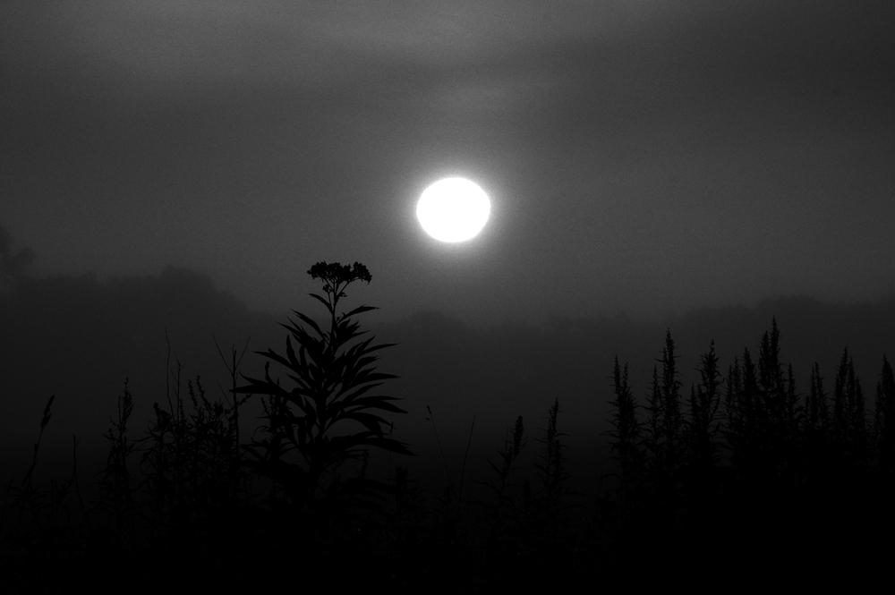 霧想-3468