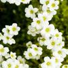 記憶の旅 幸せの白い5月
