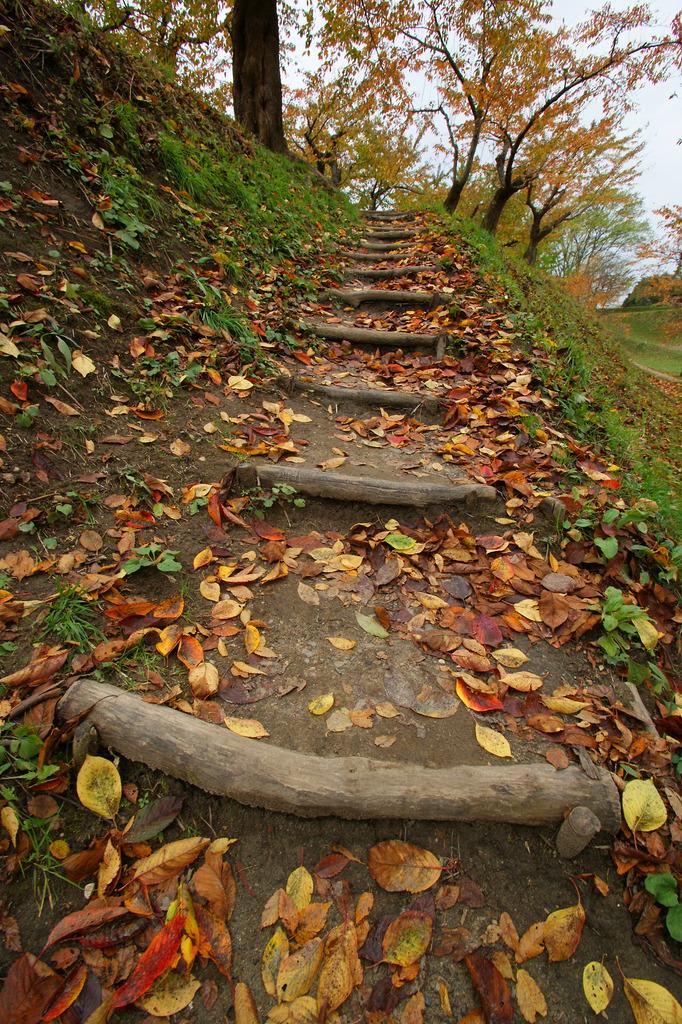 階段[落葉]