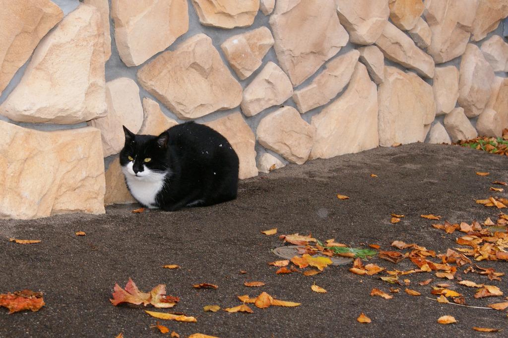 耐寒仕様的貓