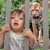トラに!食われる~