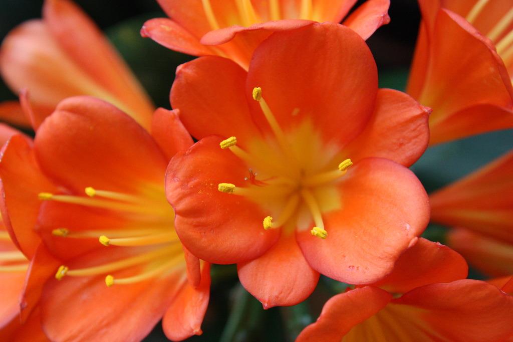 熱帯館のオレンジ色の花みっちり