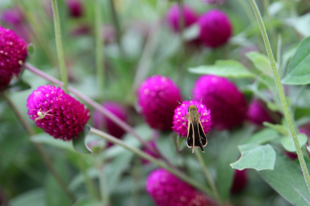 花と蝶と白い蜘蛛