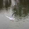 浮間公園の鳥