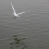 浮間公園の鳥その2