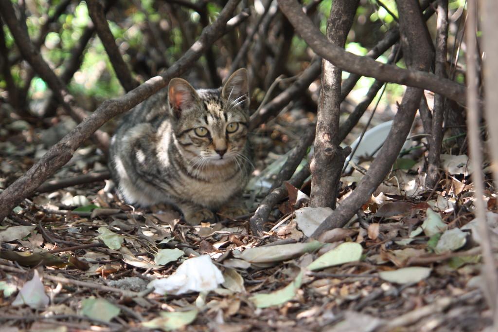 浮間公園のカモフラージュ野良猫