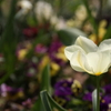 浮間公園の花壇