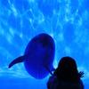 イルカと会話