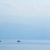 諏訪湖の朝