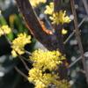 庭の不思議な花