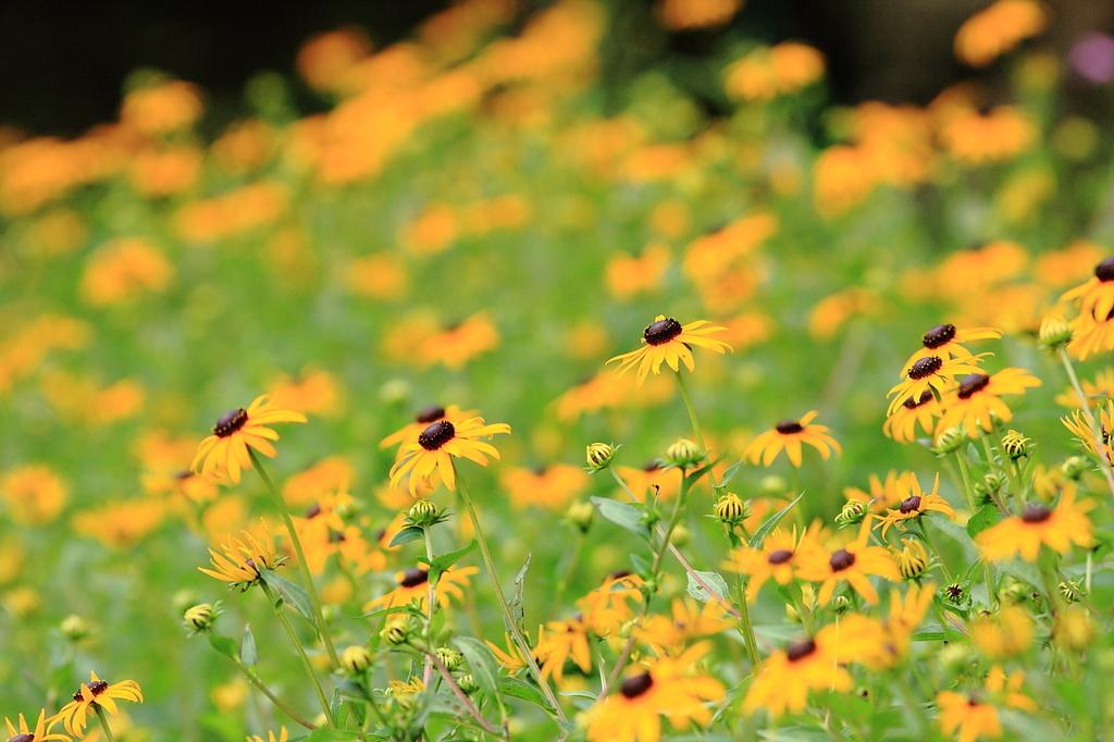 野の花たちよ