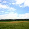 麦畑を吹き過ぎる風