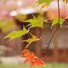 嵐山 宝厳院の紅葉