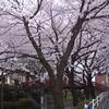 桜坂その2