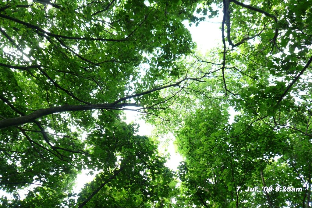 角田山:2009年7月7日午前090707-092550