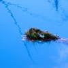 青い池 in 北海道