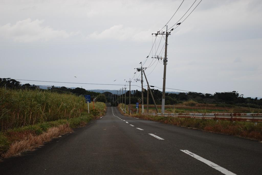 この道の、、