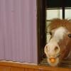 トタンと馬