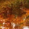 華やかな水面