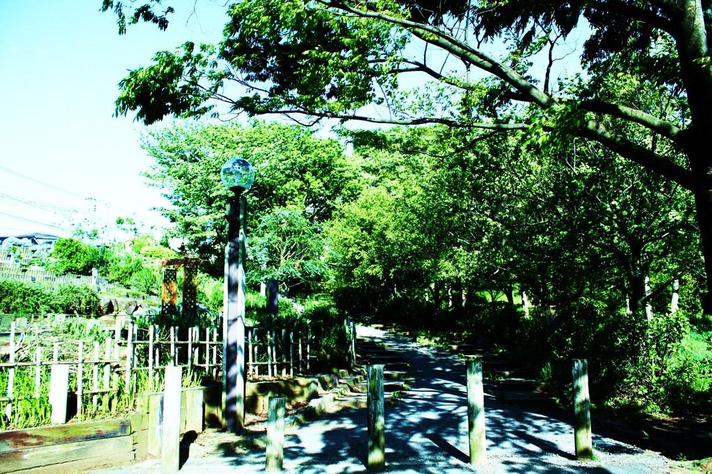 公園へ向かう道