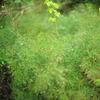 露に濡れた草