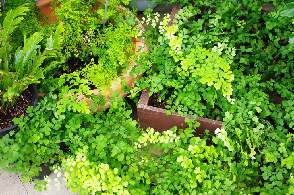 寄せ集め緑