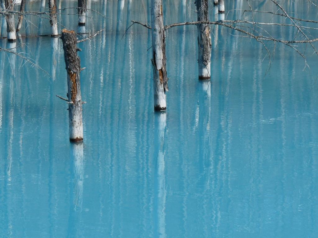 美瑛 青い池 2