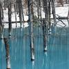 美瑛 青い池 3