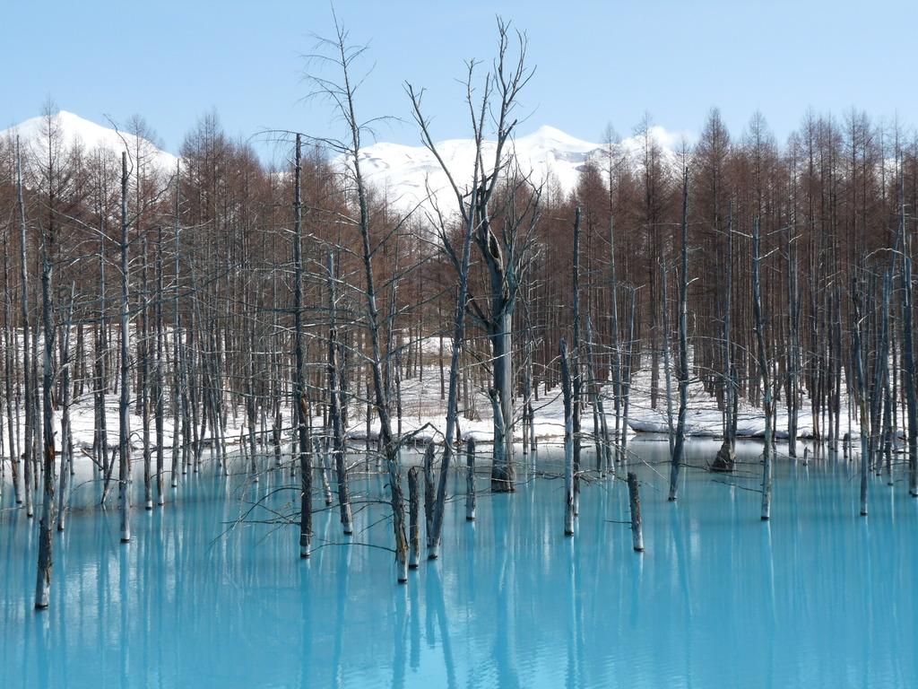 美瑛町 青い池 1