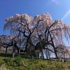 Iphone4で滝桜