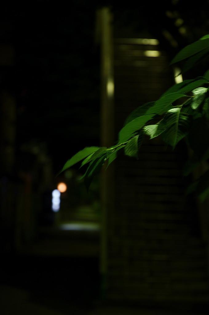 闇に浮かぶ葉