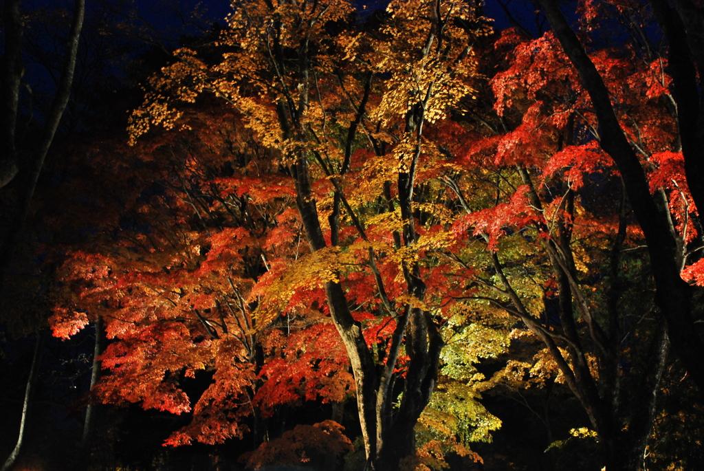 闇に浮かぶ秋
