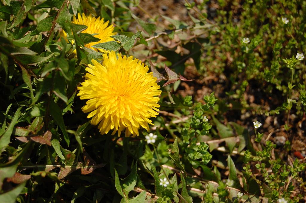 野に咲く花