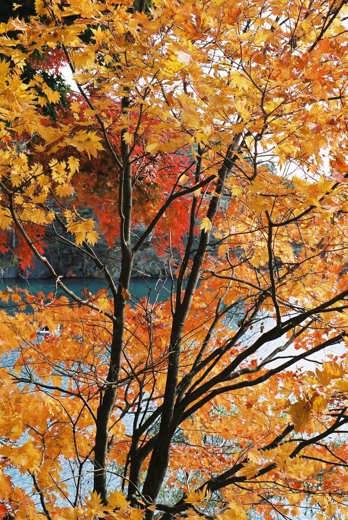 五色沼の秋