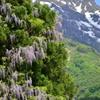山藤と霊峰八海山