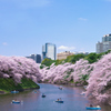 春爛漫    - 千鳥ヶ淵 -