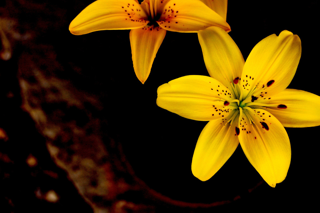 ぼんやり黄色