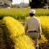 農業:稲刈