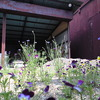 古い車庫と花