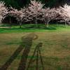 桜とキヤノンと僕
